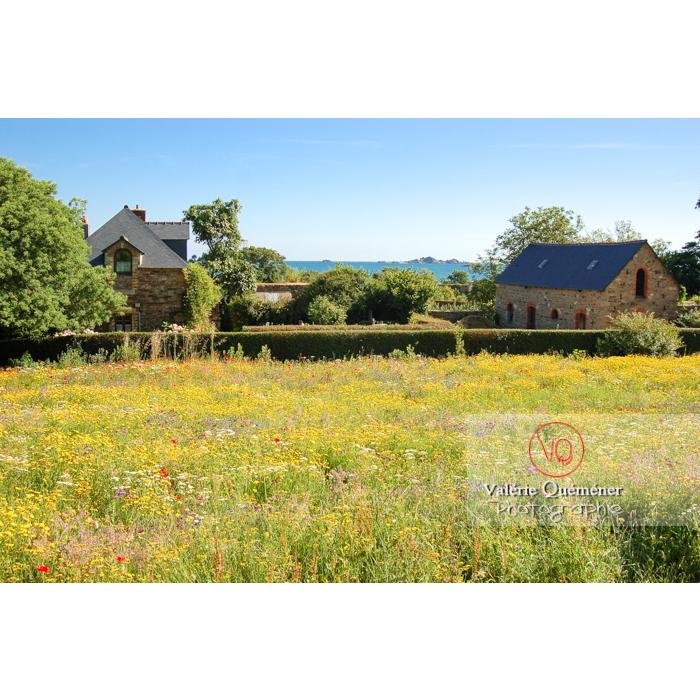 Prairie en fleurs à Kerity, commune de Paimpol / Côtes d'Armor / Bretagne - Réf : VQFR22-0171 (Q1)