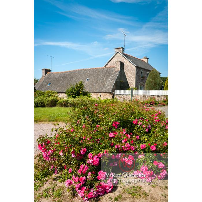 Rosier à Locarn et maison bretonne / Côtes d'Armor / Bretagne - Réf : VQFR22-0306 (Q2)