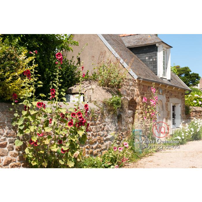 Roses trémières le long d'une maison en pierre sur l'île de Bréhat / Côtes d'Armor / Bretagne - Réf : VQFR22-0406 (Q2)
