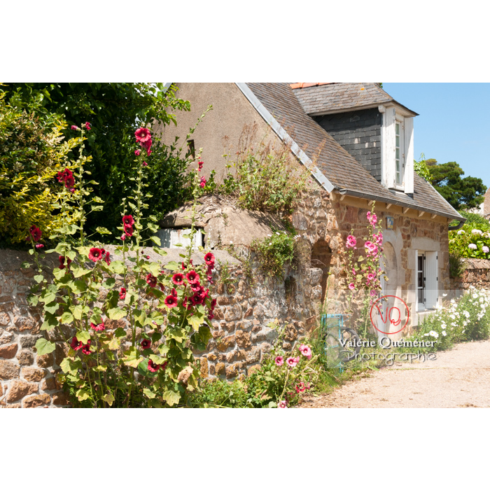 Maisons en pierre et roses trémières sur l'île de Bréhat / Côtes d'Armor / Bretagne - Réf : VQFR22-0406 (Q2)