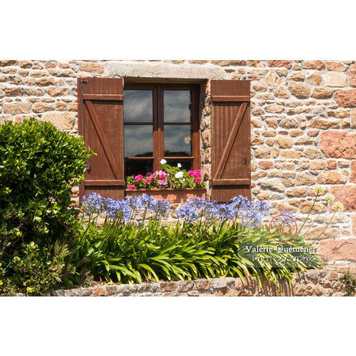 Agapanthes devant une fenêtre d'une maison en pierre sur l'île de Bréhat / Côtes d'Armor / Bretagne - Réf : VQFR22-0413 (Q2)