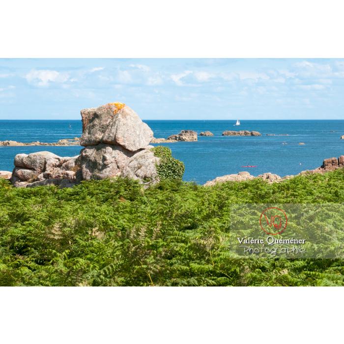 Littoral de l'île de Bréhat couvert de fougères / Côtes d'Armor / Bretagne - Réf : VQFR22-0416 (Q2)
