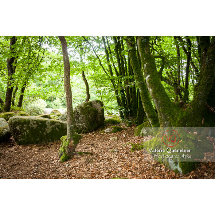 Les chaos de Toul-Goulic / Côtes d'Armor / Bretagne - Réf : VQFR22-0496 (Q2)