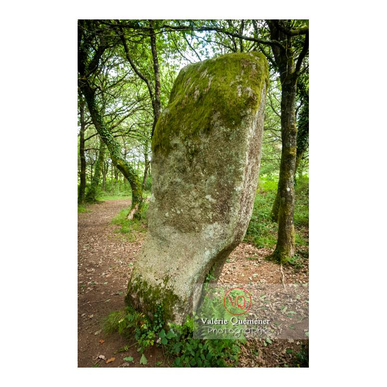 Menhir Le Guellec à Locarn / Côtes d'Armor / Bretagne - Réf : VQFR22-0514 (Q2)