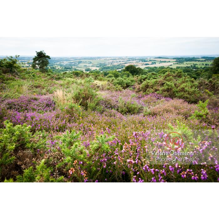 Paysage de landes de bruyères et graminées à Locarn / Côtes d'Armor / Bretagne - Réf : VQFR22-0519 (Q2)