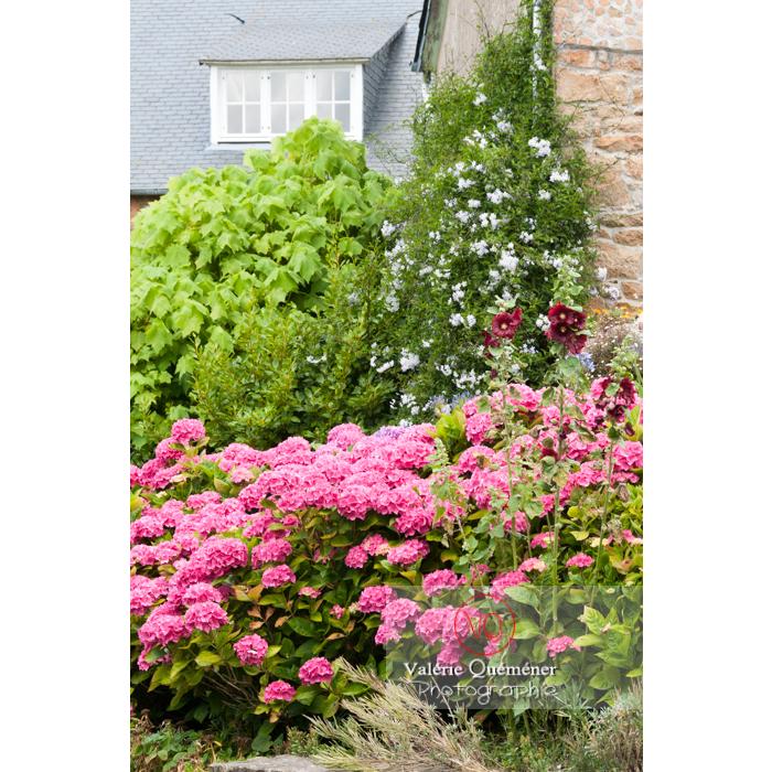 Massif de fleurs sur l'île de Bréhat / Côtes d'Armor / Bretagne - Réf : VQFR22-1005 (Q2)