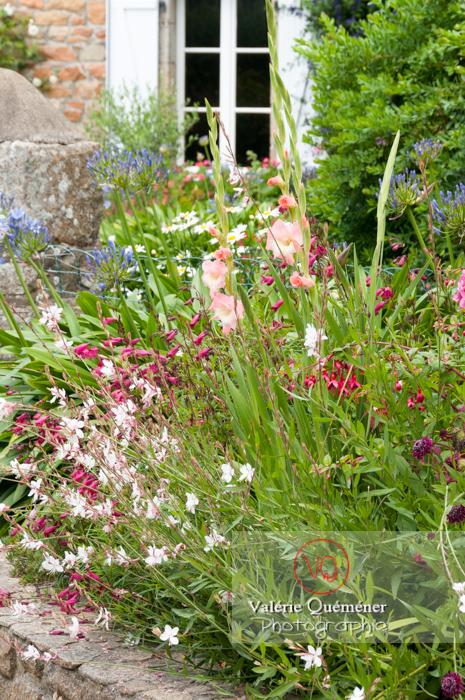 Massif de fleurs sur l'île de Bréhat / Côtes d'Armor / Bretagne - Réf : VQFR22-1006