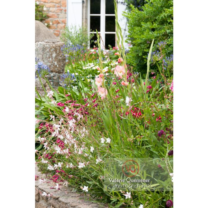 Massif de fleurs devant une maison sur l'île de Bréhat / Côtes d'Armor / Bretagne - Réf : VQFR22-1006 (Q2)