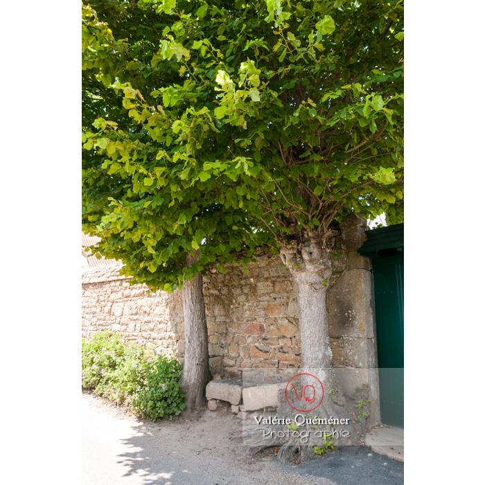 Arbres ombrageant un banc sur l'île de Bréhat / Côtes d'Armor / Bretagne - Réf : VQFR22-1009 (Q2)