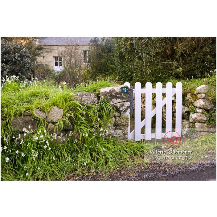 Allium triquetrum proliférant sur le muret d'une maison à Port-Blanc, commune de Penvénan / Côtes d'Armor (22) / France - Réf : VQFR22-3077 (Q3)