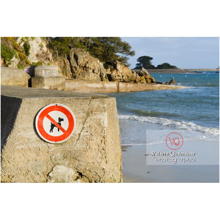 Panneau interdisant l'accès aux chiens sur la plage à Port-Blanc, commune de Penvénan / Côtes d'Armor (22) / France - Réf : VQFR22-3087 (Q3)