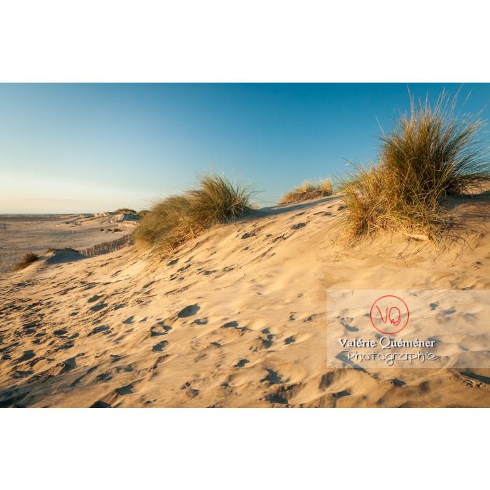 Dunes de la pointe de l'Espiguette en petite camargue / Gard / Occitanie - Réf : VQFR30-0074 (Q2)