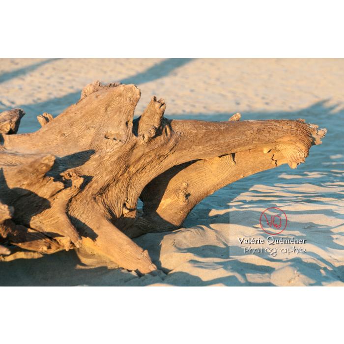 Pièce d'arbre échouée sur la plage de l'Espiguette en petite camargue / Gard / Occitanie - Réf : VQFR30-0092 (Q2)