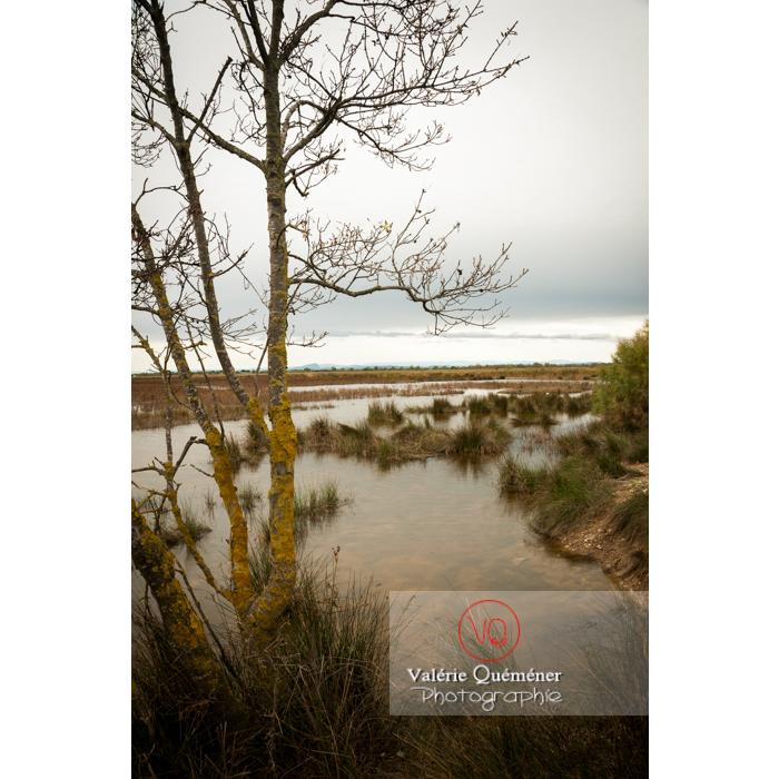 Lagune en Petite Camargue près de la tour Carbonnière dans le Gard - Réf : VQFR30-0103 (Q2)