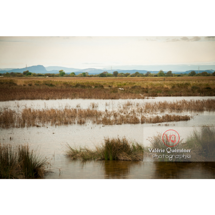 Lagune en Petite Camargue près de la Tour Carbonnière dans le Gard - Réf : VQFR30-0104 (Q3)