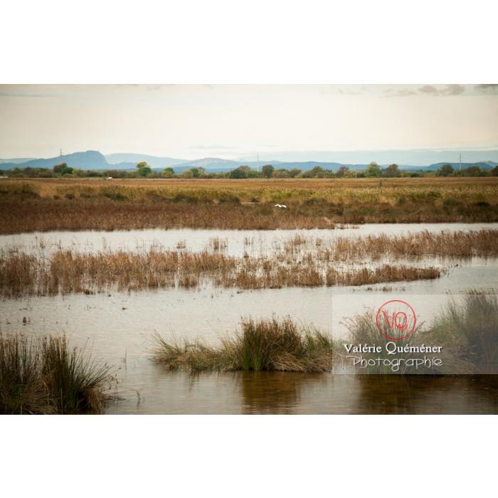 Lagune en Petite Camargue près de la tour Carbonnière dans le Gard - Réf : VQFR30-0104 (Q2)