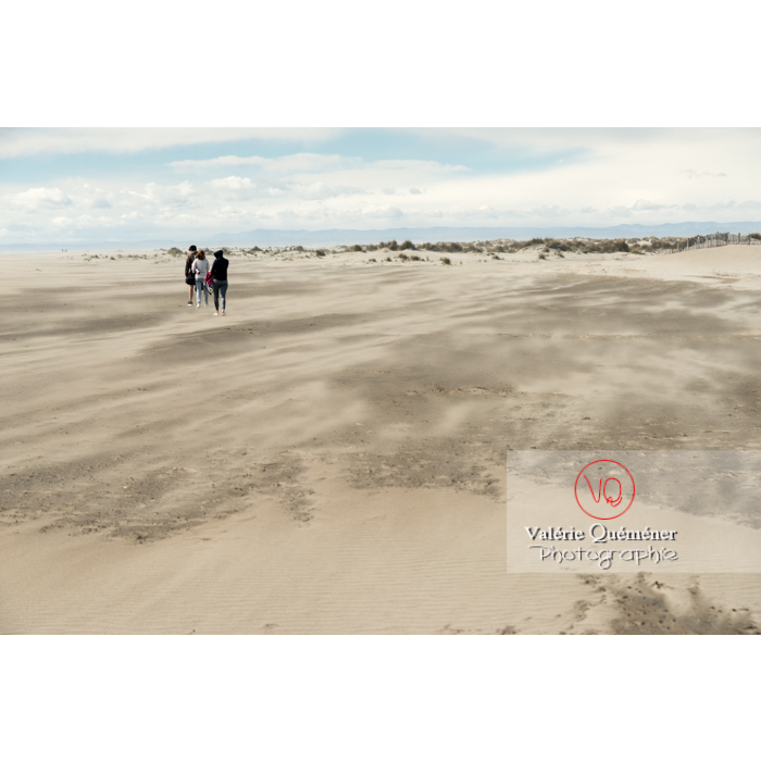 Grand vent sur la plage de l'Espiguette en petite camargue / Gard / Occitanie - Réf : VQFR30-0244 (Q3)