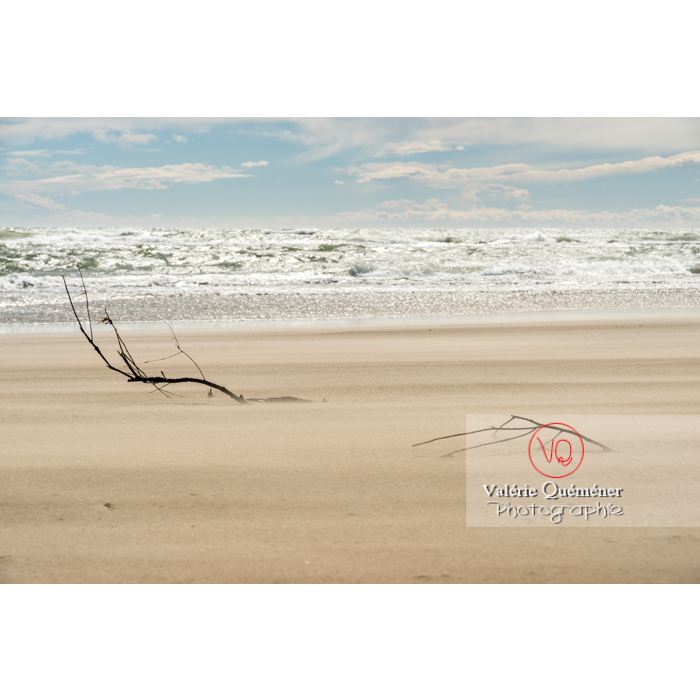 Branche d'arbre ancrée sur le sable de la plage de l'Espiguette en petite camargue / Gard / Occitanie - Réf : VQFR30-0249 (Q3)