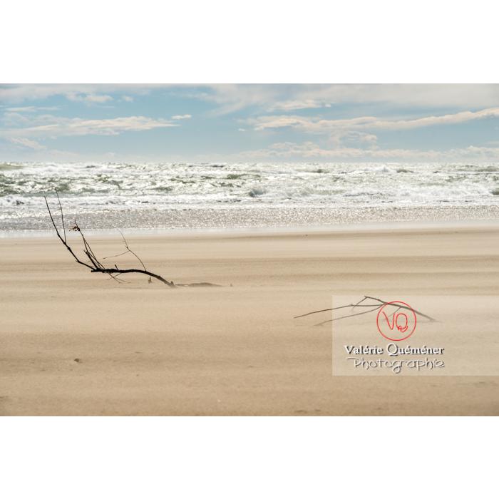 Branches ancrées dans le sable de la pointe de l'Espiguette, petite camargue / Gard / Occitanie - Réf : VQFR30-0249 (Q3)