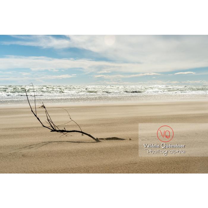 Branche d'arbre ancrée dans le sable de la plage de l'Espiguette en petite camargue / Gard / Occitanie - Réf : VQFR30-0250 (Q3)