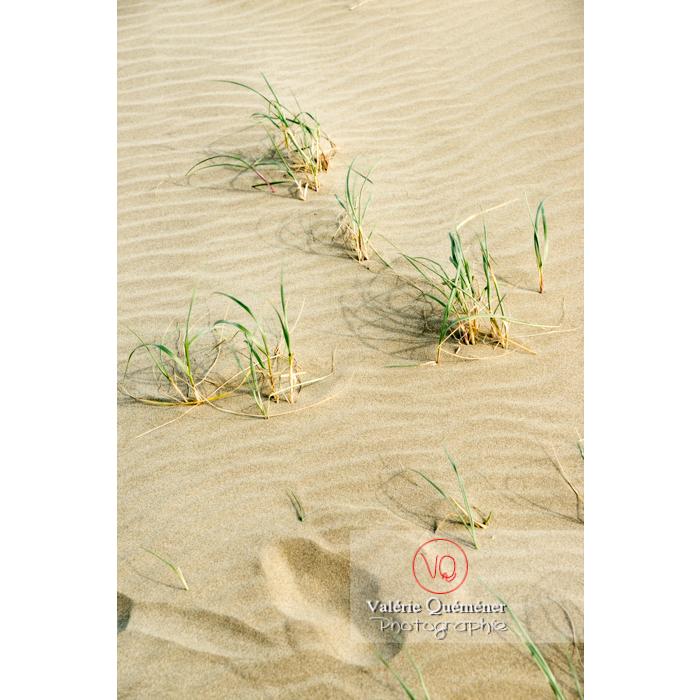 Touffes d'oyat sur la plage de l'Espiguette, petite camargue / Gard / Occitanie - Réf : VQFR30-0262 (Q3)