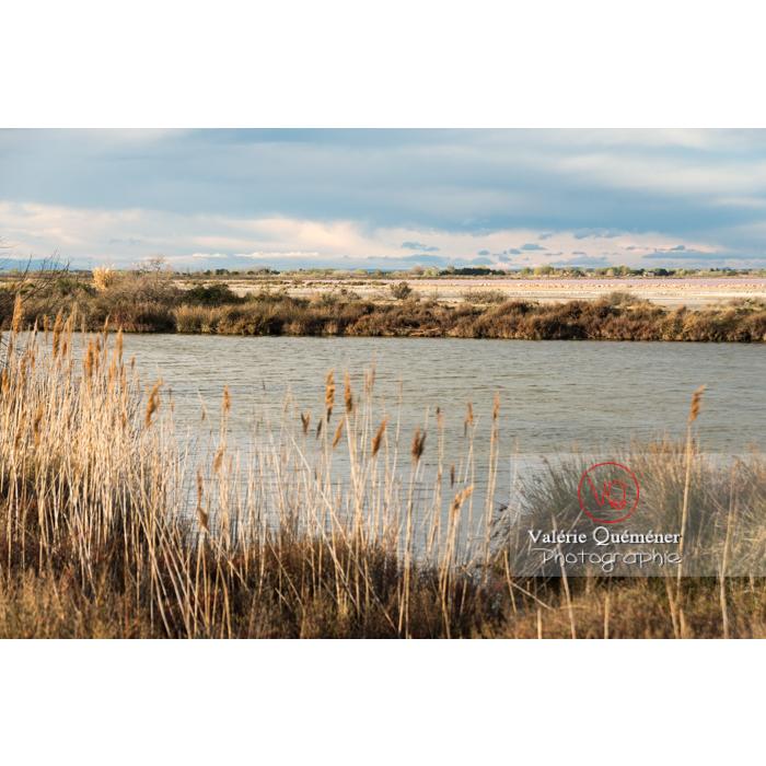 Roselières des étangs de la petite camargue / Gard / Occitanie - Réf : VQFR30-0290 (Q3)