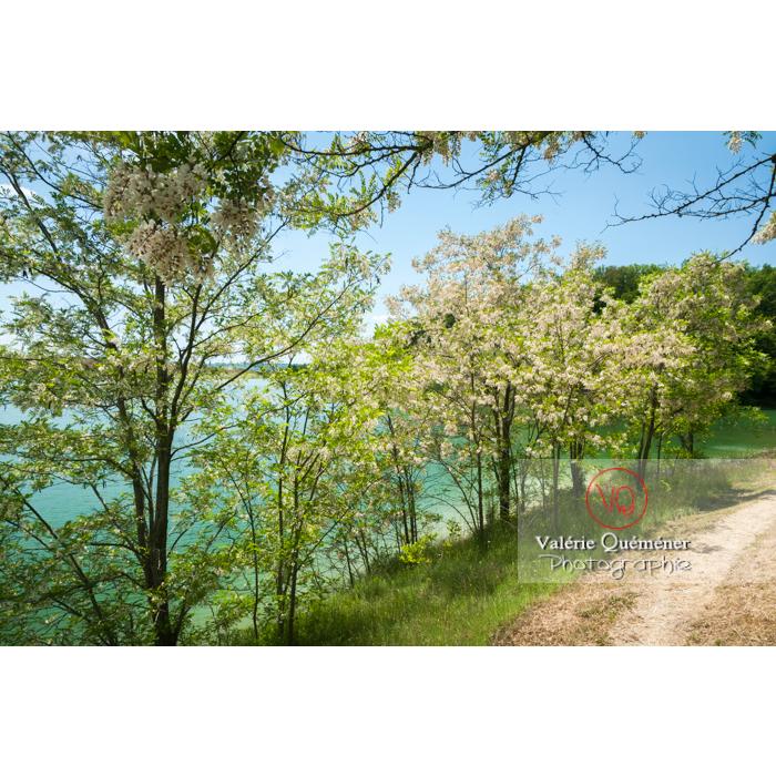 Lac de la Balerme sur la commune de Verfeil / Haute-Garonne / Occitanie - Réf : VQFR31-0093 (Q2)