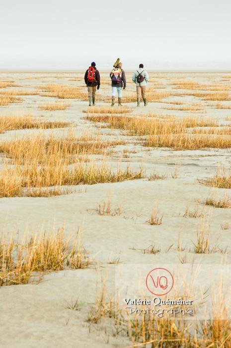 Balade dans la baie du Mont-St-Michel à marée basse - Réf : VQFR50-0014 (Q1)