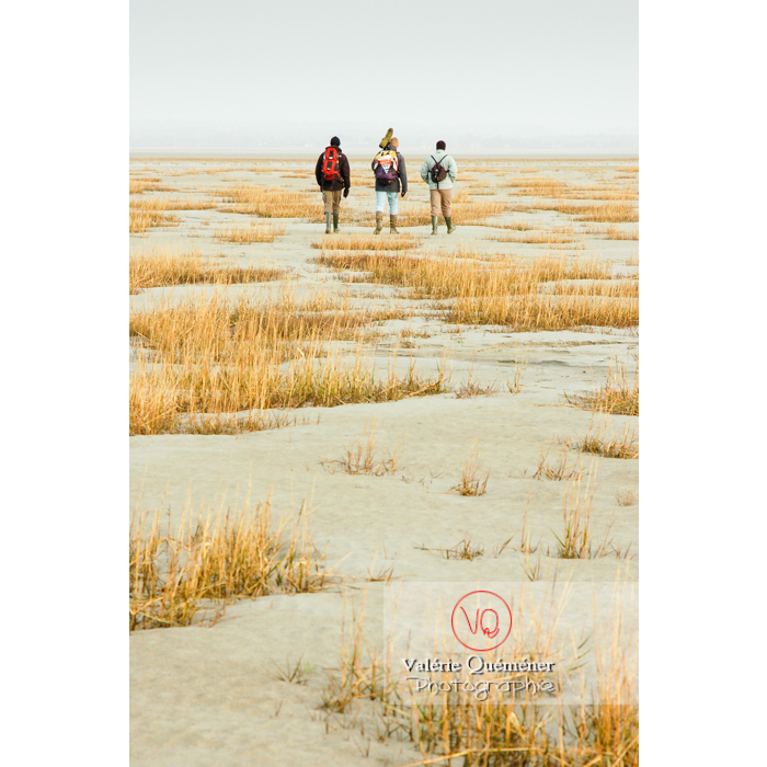 Balade avec un guide dans la baie du Mont-St-Michel à marée basse - Réf : VQFR50-0014 (Q1)