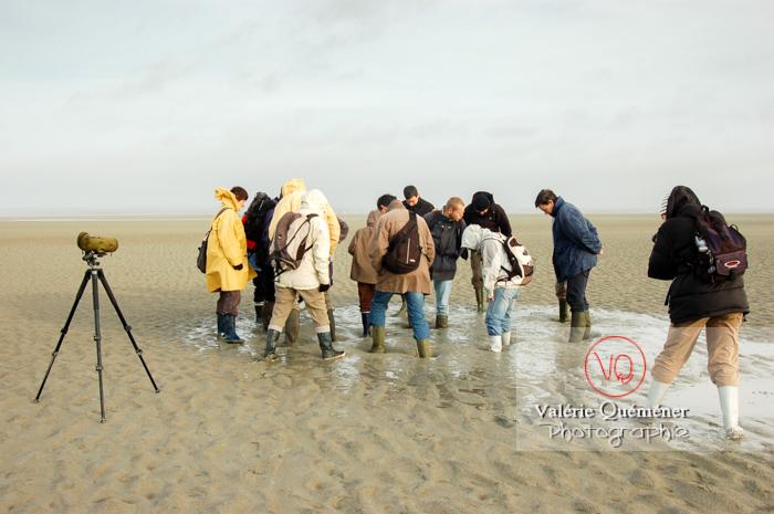 Test de sables mouvants dans la baie du Mont-St-Michel / Normandie - Réf : VQFR50-0021 (Q1)