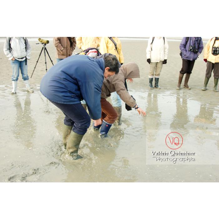 Test sables mouvants dans la baie du Mont-St-Michel - Réf : VQFR50-0023 (Q1)