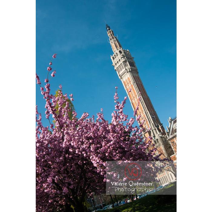 Cerisier décoratif en fleurs / Lille / Nord / Hauts-de-France - Réf : VQFR59-0014 (Q2)