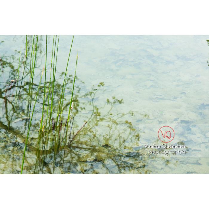 Reflet du végétal dans l'eau - Réf : VQFR59-0025 (Q2)