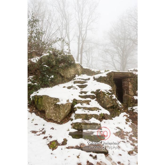 Escalier dans la foret à l'ouest du château du Haut-Koenigsbourg (MH) / Orschwiller / Bas-Rhin / Grand-Est - Réf : VQFR67-0216 (Q3)
