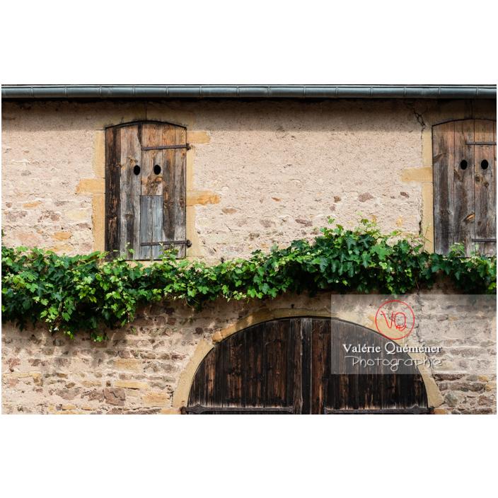 Détail texture de pierre, bois, végétal au château de La Clayette (MH) / La Clayette / Saône-et-Loire / Bourgogne-Franche-Comté - Réf : VQFR71-2719 (Q3)