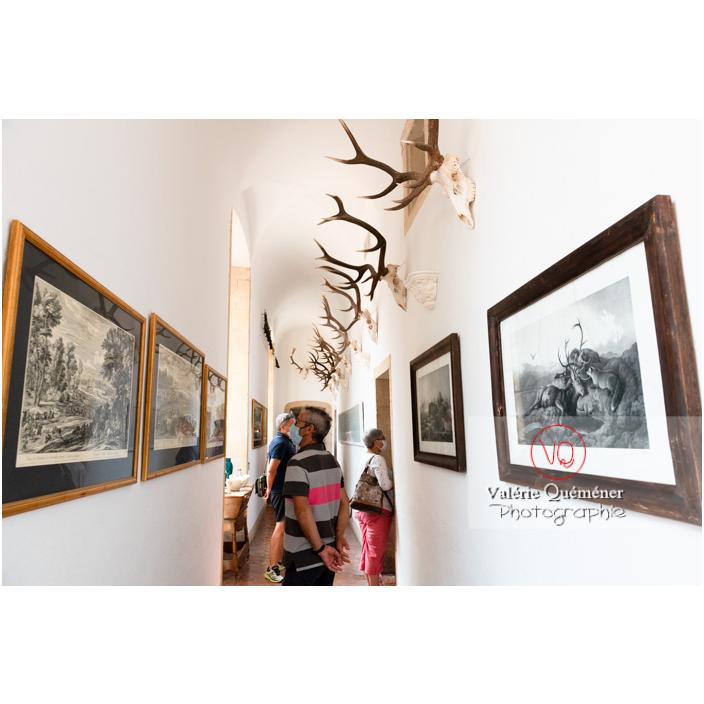 Décoration de tableaux et trophées de chasse dans un couloir du château de Drée (MH) à Curbigny / Saône-et-Loire / Bourgogne-Franche-Comté - Réf : VQFR71-2810 (Q3)