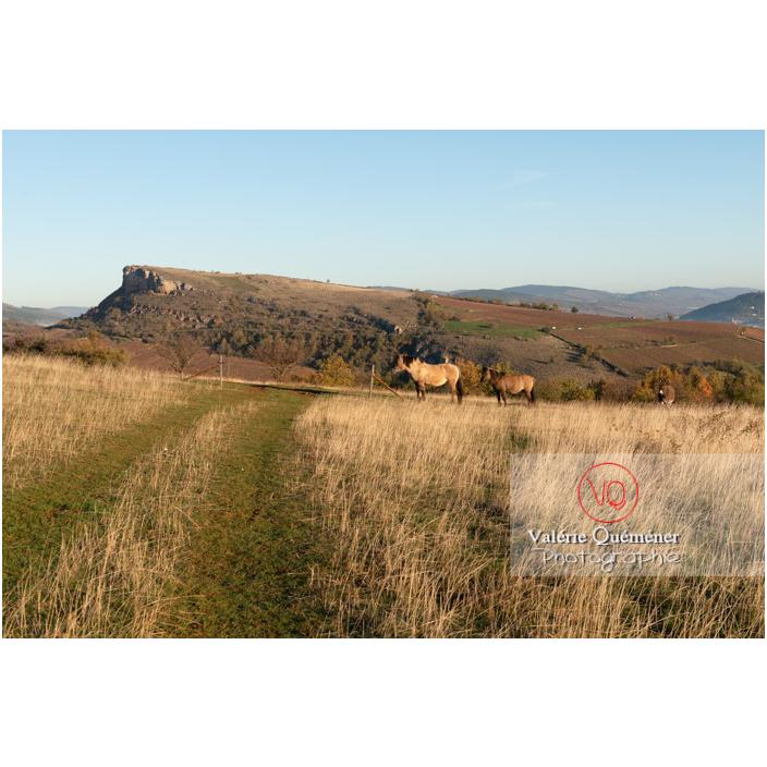 Chevaux Konik Polski de la roche Solutré devant la roche de Vergisson en hiver / Saône-et-Loire (71) / Bourgogne-Franche-Comté - Réf : VQFR71-4311 (Q3)