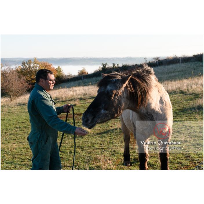 Préparation d'un cheval Konik Polski de la roche Solutré pour la transhumance d'hiver / Saône-et-Loire (71) / Bourgogne-Franche-Comté - Réf : VQFR71-4333 (Q3)