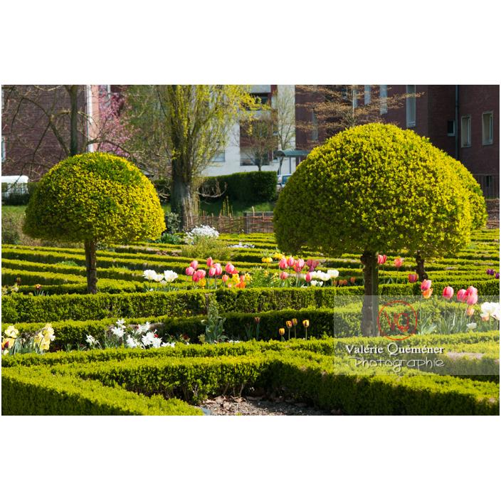 Art topiaire au jardin des plantes d'Amiens / Somme / Hauts-de-France - Réf : VQFR80-0007 (Q2)
