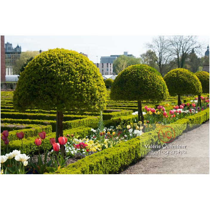 Art topiaire au jardin des plantes d'Amiens / Somme / Hauts-de-France - Réf : VQFR80-0008 (Q2)