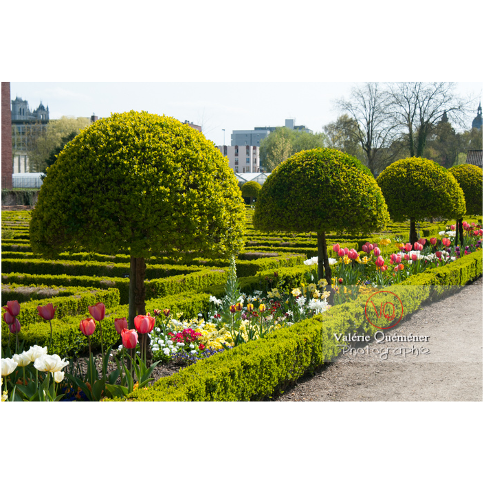 Parterre de tulipe au jardin des plantes d'Amiens / Somme / Hauts-de-France - Réf : VQFR80-0008 (Q2)