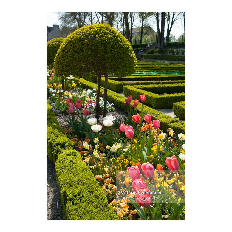Parterre de tulipe au jardin des plantes d'Amiens / Somme / Hauts-de-France - Réf : VQFR80-0009 (Q2)