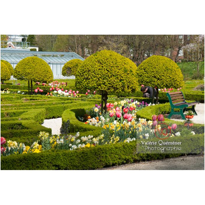 Art topiaire au jardin des plantes d'Amiens / Somme / Hauts-de-France - Réf : VQFR80-0012 (Q2)