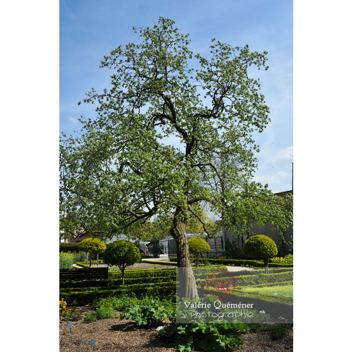 Jardin des plantes, Amiens / Somme / Hauts-de-France - Réf : VQFR80-0014 (Q2)