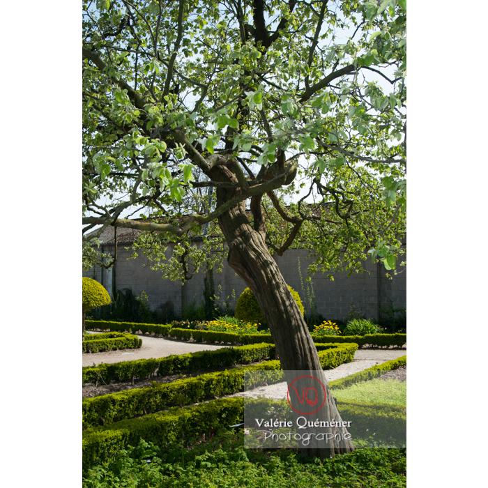 Jardin des plantes, Amiens / Somme / Hauts-de-France - Réf : VQFR80-0015 (Q2)