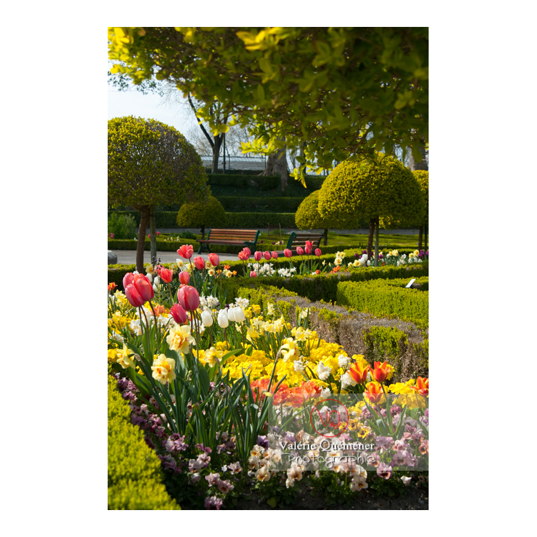 Parterre de tulipe au jardin des plantes d'Amiens / Somme / Hauts-de-France - Réf : VQFR80-0017 (Q2)