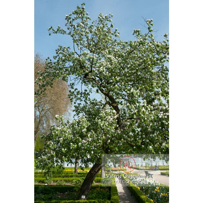 Jardin des plantes, Amiens / Somme / Hauts-de-France - Réf : VQFR80-0020 (Q2)