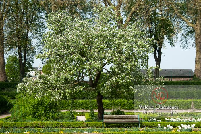Jardin des plantes, Amiens - Réf : VQFR80-0021