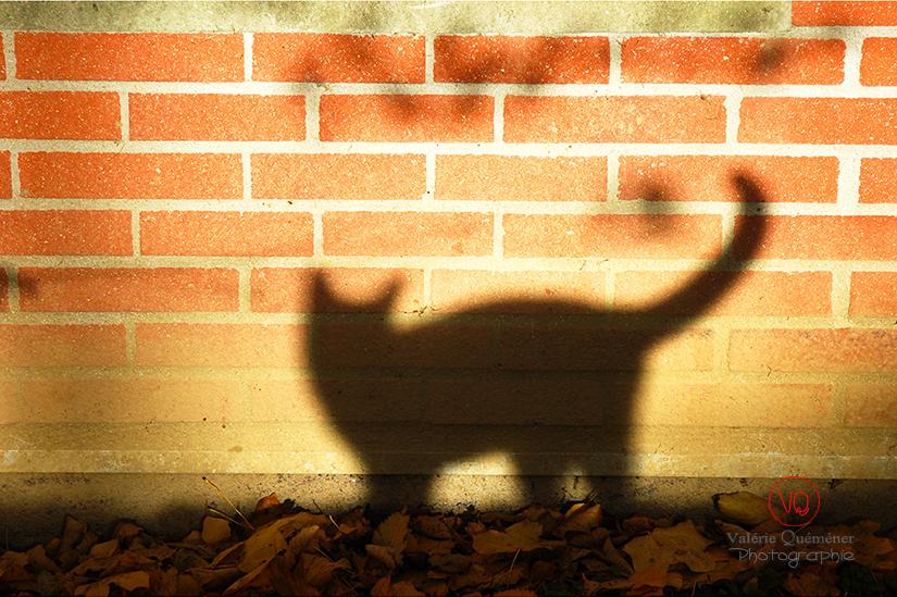 Silhouette | © Valérie Quéméner - Réf : VQA1-24-0041
