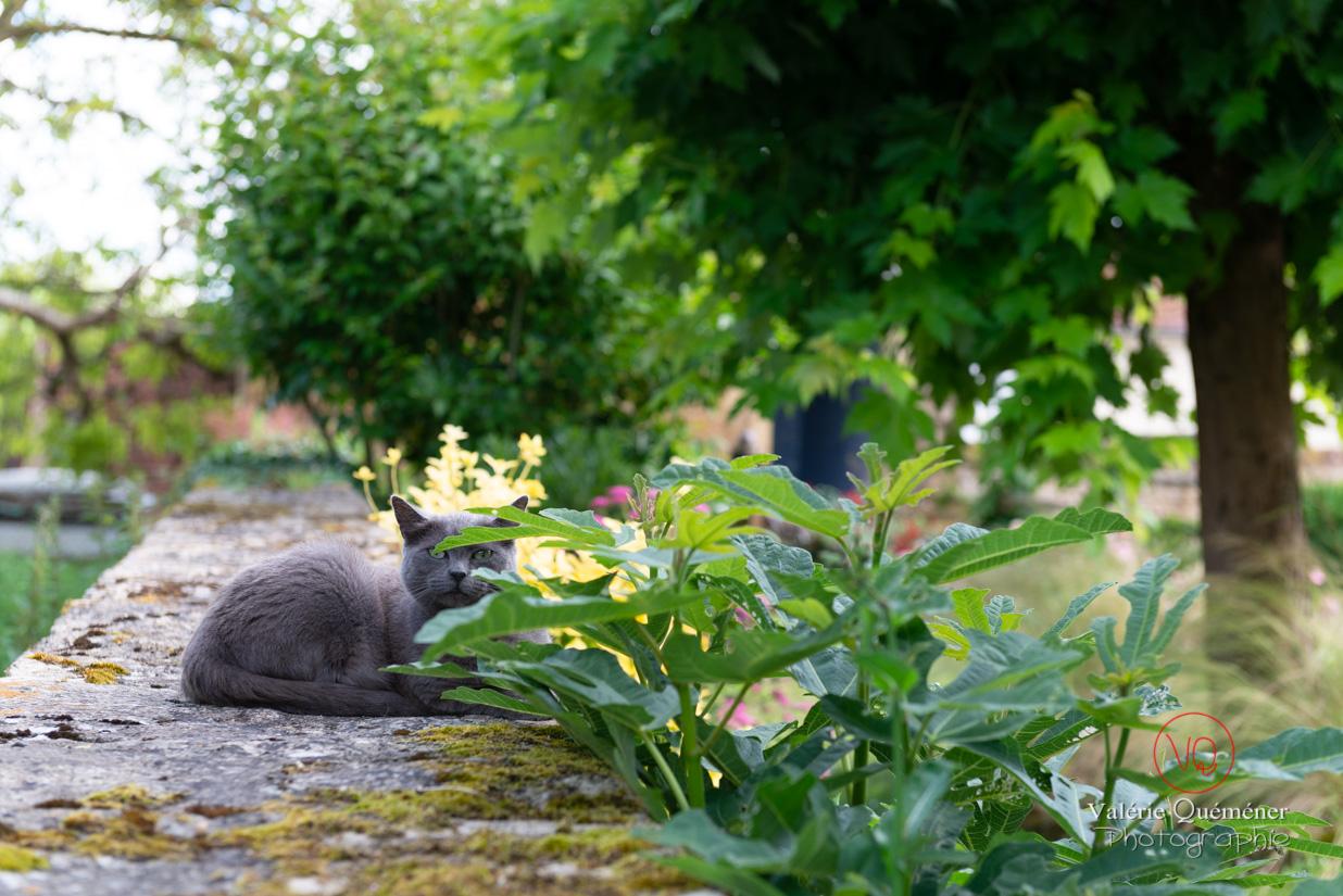 Chat dans le jardin de l'église Saint-Nicolas dans le village de Trémolat | © Valérie Quéméner - Réf : VQFR24-0262